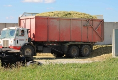 Forage-Harvesting_1304